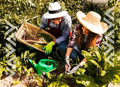 ¿Cómo hacer un huerto ecológico en el jardín de tu casa?